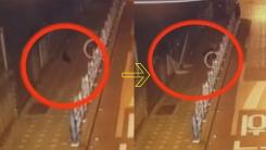 선거 벽보 훼손한 '길고양이'?...네티즌 반응은