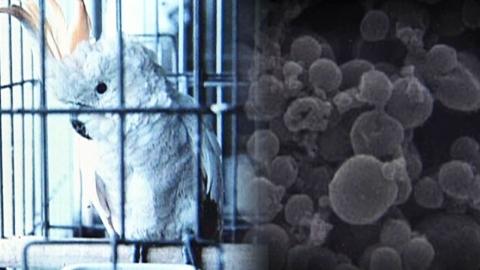 '앵무새병'에 日 임산부 2명 사망…비둘기도 위험