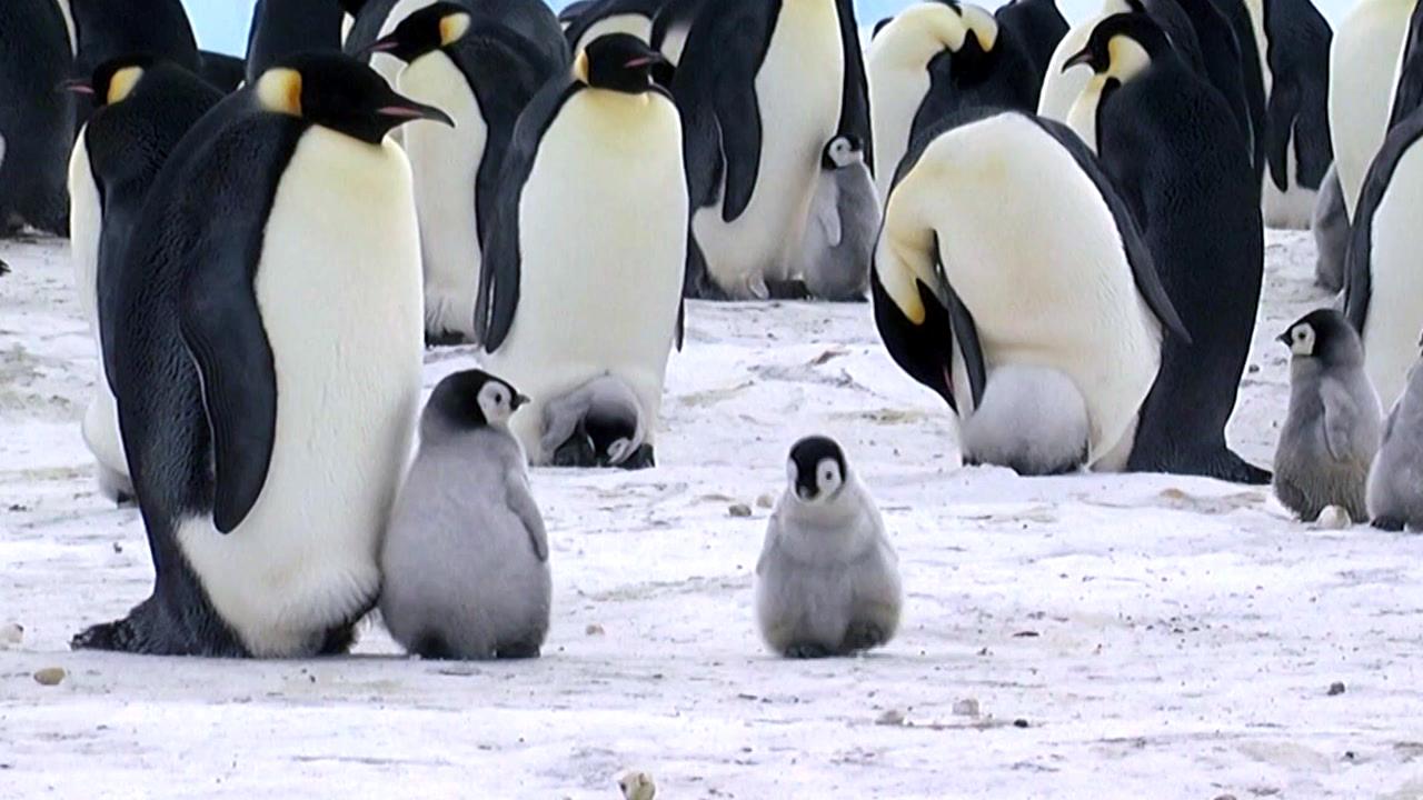 '남극 신사' 펭귄, 북극에는 왜 없나요?