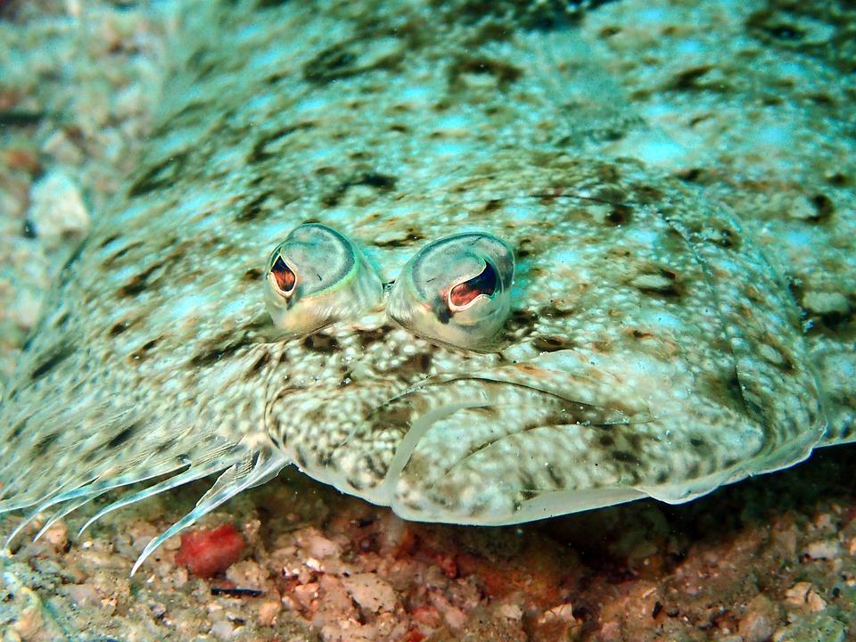해수부 5월의 어식백세 수산물로 광어, 다슬기 선정
