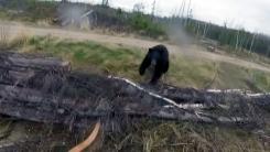 [지구촌생생영상] '공포의 순간'...사냥꾼에 달려드는 야생 곰