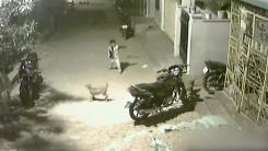 [영상] '덤빌 테면 덤벼봐'...골목길 개들과 신경전