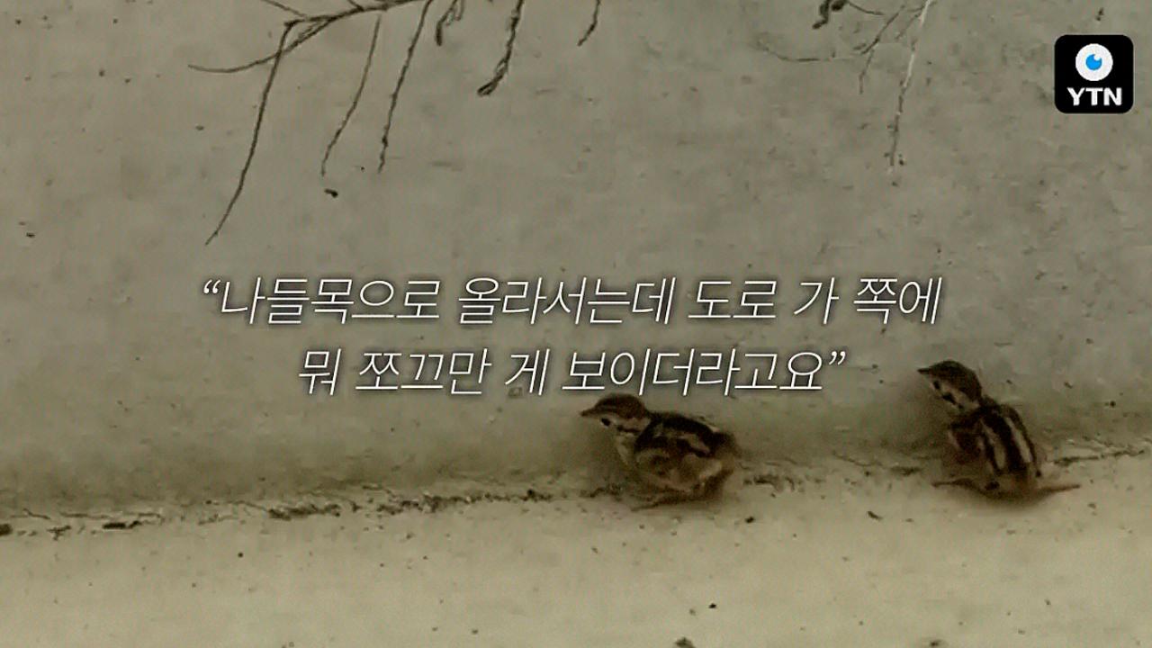 [블박TV] 작전명 '꺼병이를 구출하라'