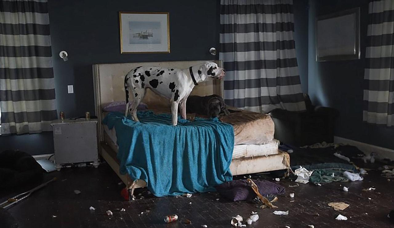 '쓰레기 집'에서 배설물에 뒤엉켜 살아온 84마리 강아지