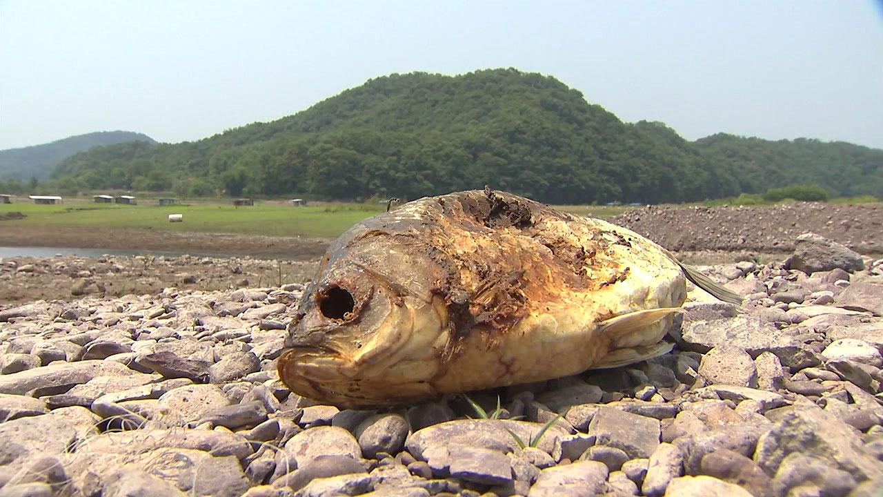 [날씨] 유례없는 6월 가뭄...단비 소식은 언제?