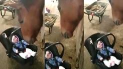 마구간에서 울음 터뜨린 아기...조용히 달래준 말
