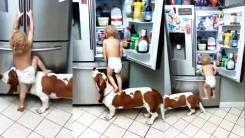 반려견까지 동원한 아기의 '냉장고 습격사건'