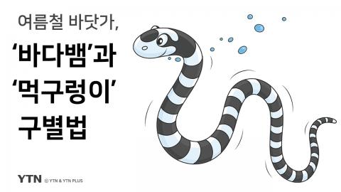 """그것을 알려주마 """"바다뱀과 먹구렁이 구별법"""""""