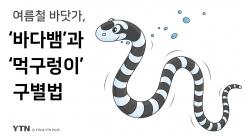 """[한컷뉴스] 그것을 알려주마 """"바다뱀과 먹구렁이 구별법"""""""
