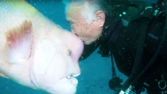 25년간 혹돔과 우정을 나누는 잠수부