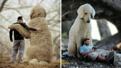 '강아지'가 인간의 가장 좋은 친구임을 보여주는 사진