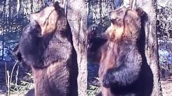 """[영상] """"흥이 넘쳐서""""...나무 잡고 봉춤 추는 곰"""