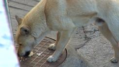 '돌아온 유기의 계절' 반려동물 잔혹사
