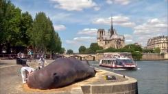 파리 센 강에서 발견된 17m 거대 고래의 정체