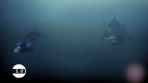 수영황제 펠프스 vs 백상아리 '세기의 수영 대결'