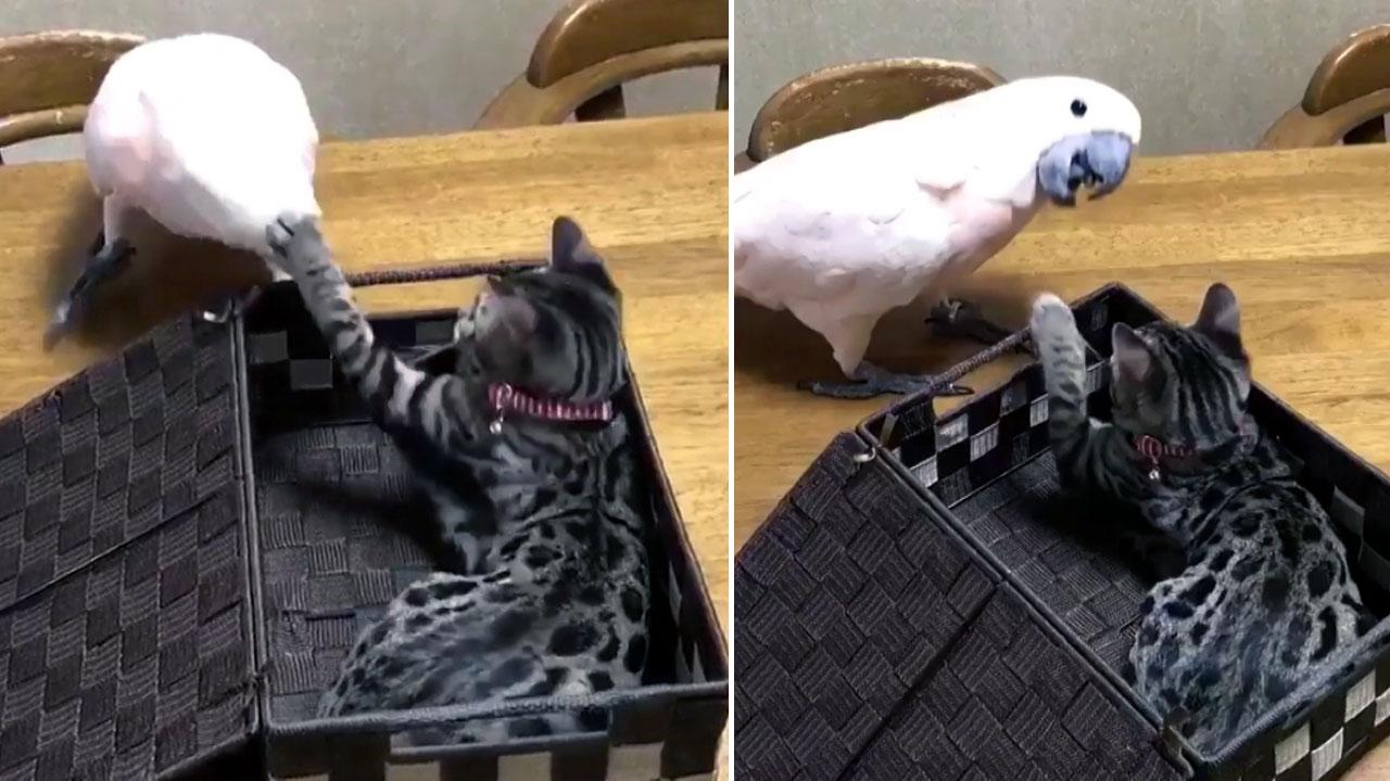 앵무새가 배은망덕한 고양이를 응징하는 법