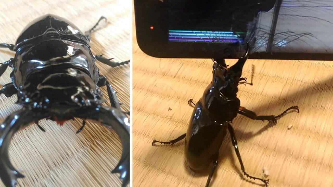 휴대 전화 액정 파괴...'사슴벌레 집게'의 놀라운 힘