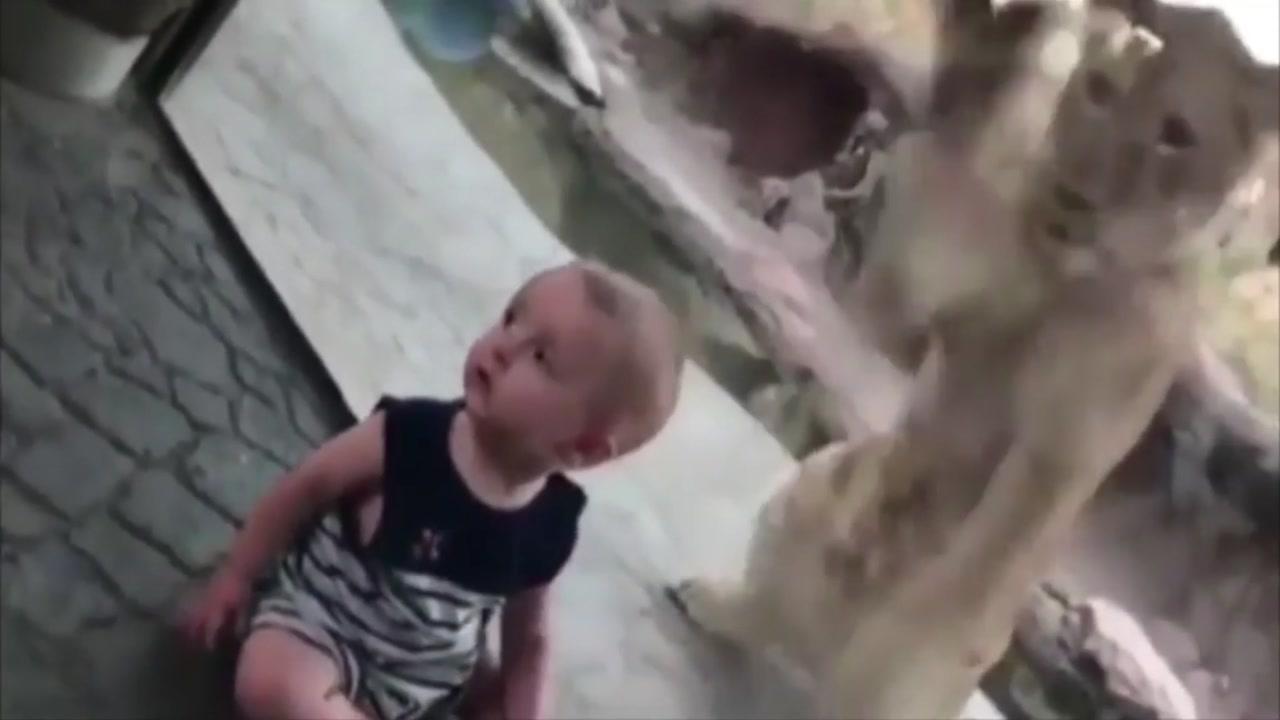 [지구촌생생영상] '보고 싶어'...아기와 사자의 엇갈린 만남