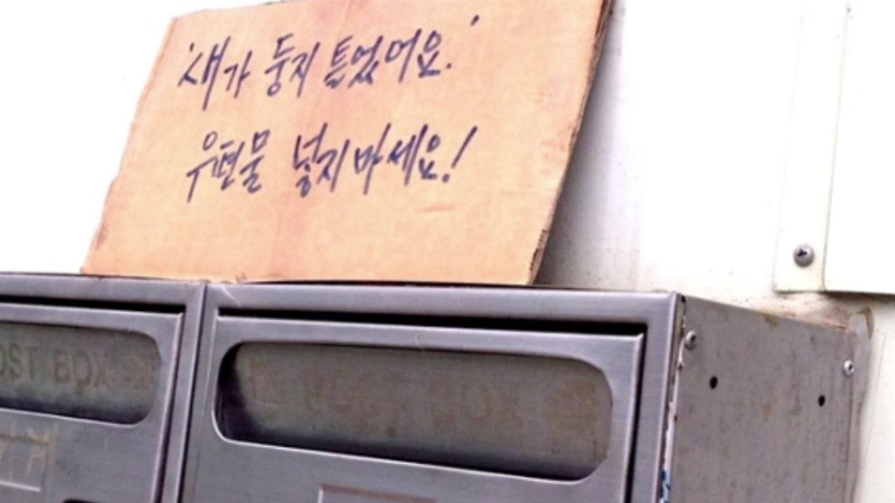 [좋은뉴스] 우편함에 둥지 틀어 '다섯 생명' 탄생