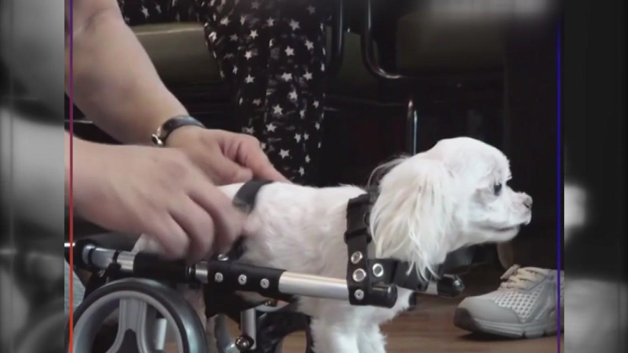 [좋은뉴스] '휠체어 아저씨'의 특별한 선물