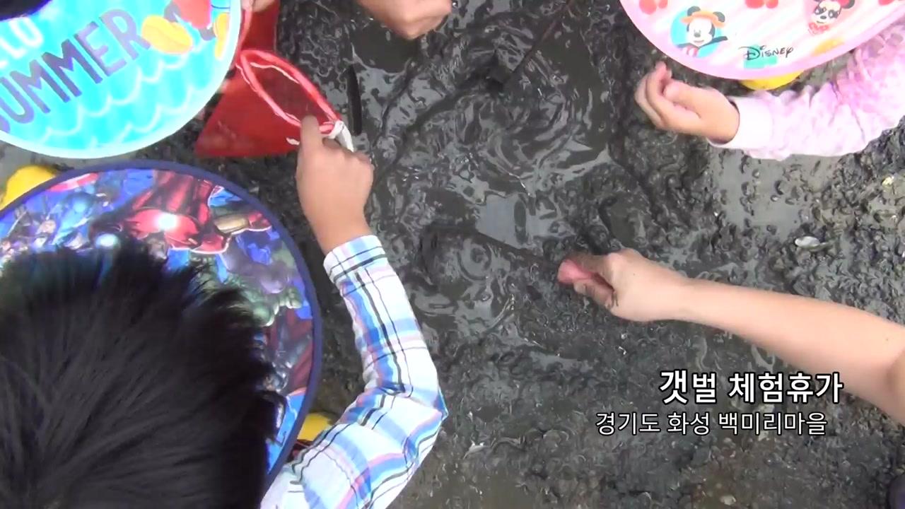 [영상] 신나는 갯벌 체험