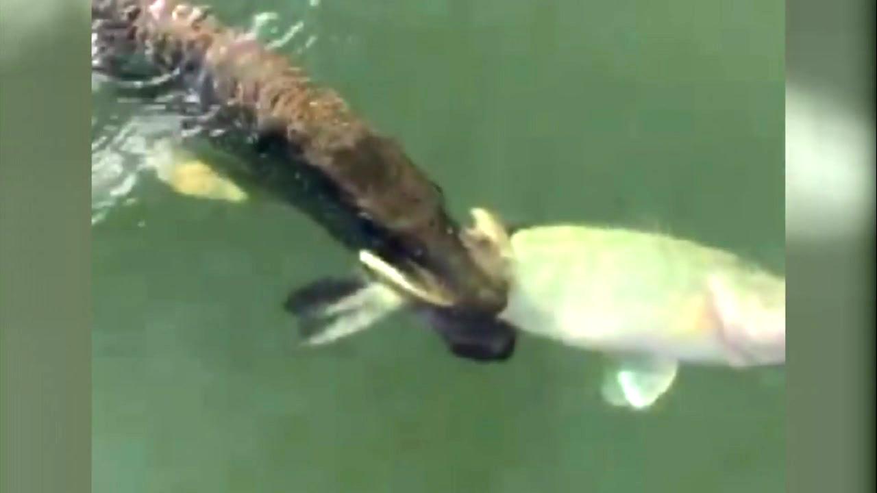 식탐을 이기지 못한 물고기의 최후