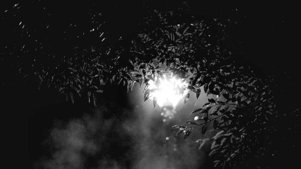 [포토에세이-자라섬] 아직 밤은 밝아