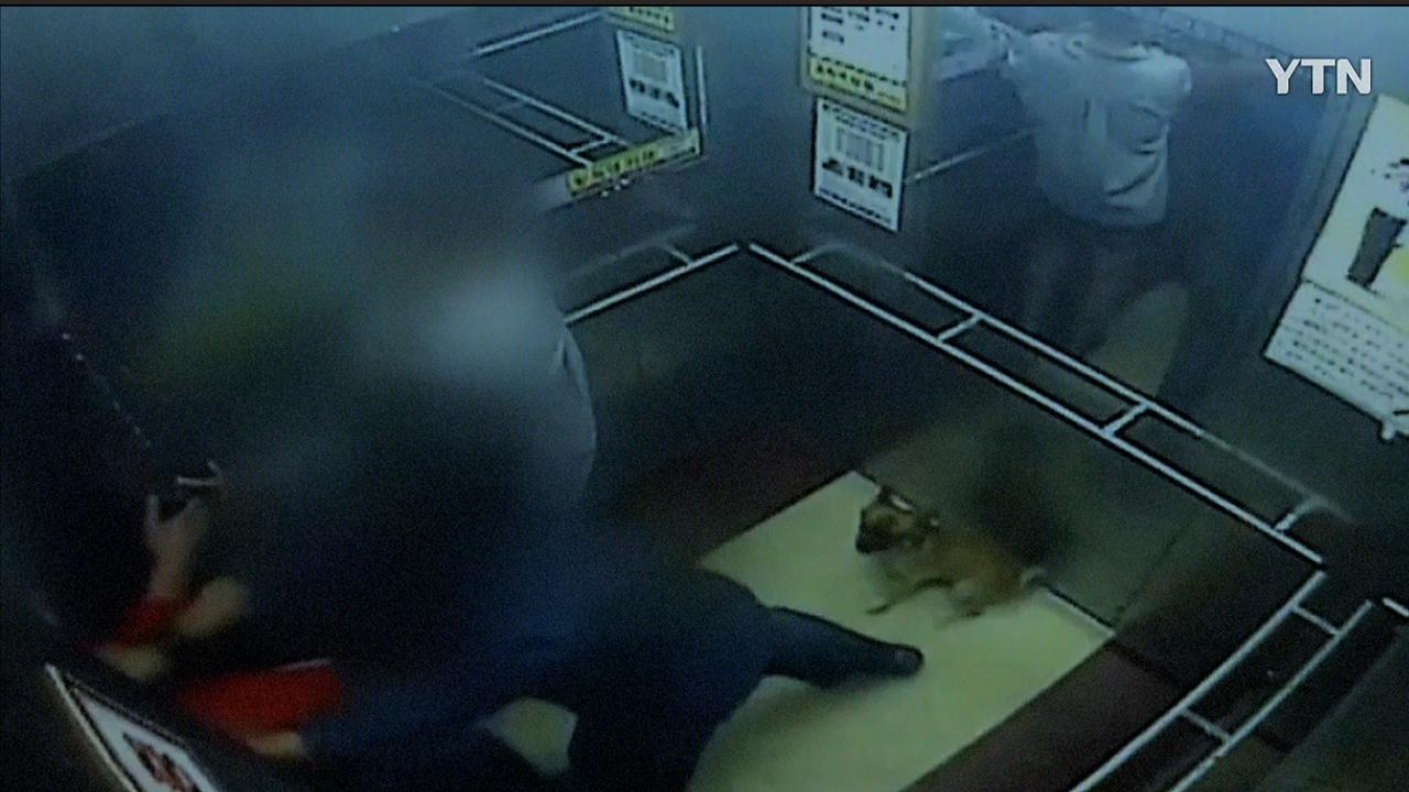 [영상] '애완견 목줄' 때문에 벌어진 끔찍한 사건