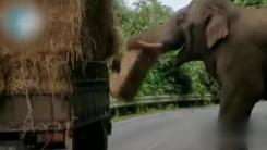 """[지구촌생생영상] """"너무 배고파요""""...트럭 습격한 야생 코끼리"""