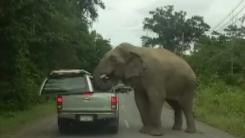 '먹을 것 좀 내놔'...야생 코끼리의 습격