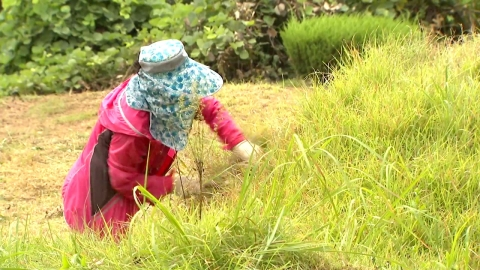 막바지 벌초 한창…벌초 문화도 변화 불가피할 듯