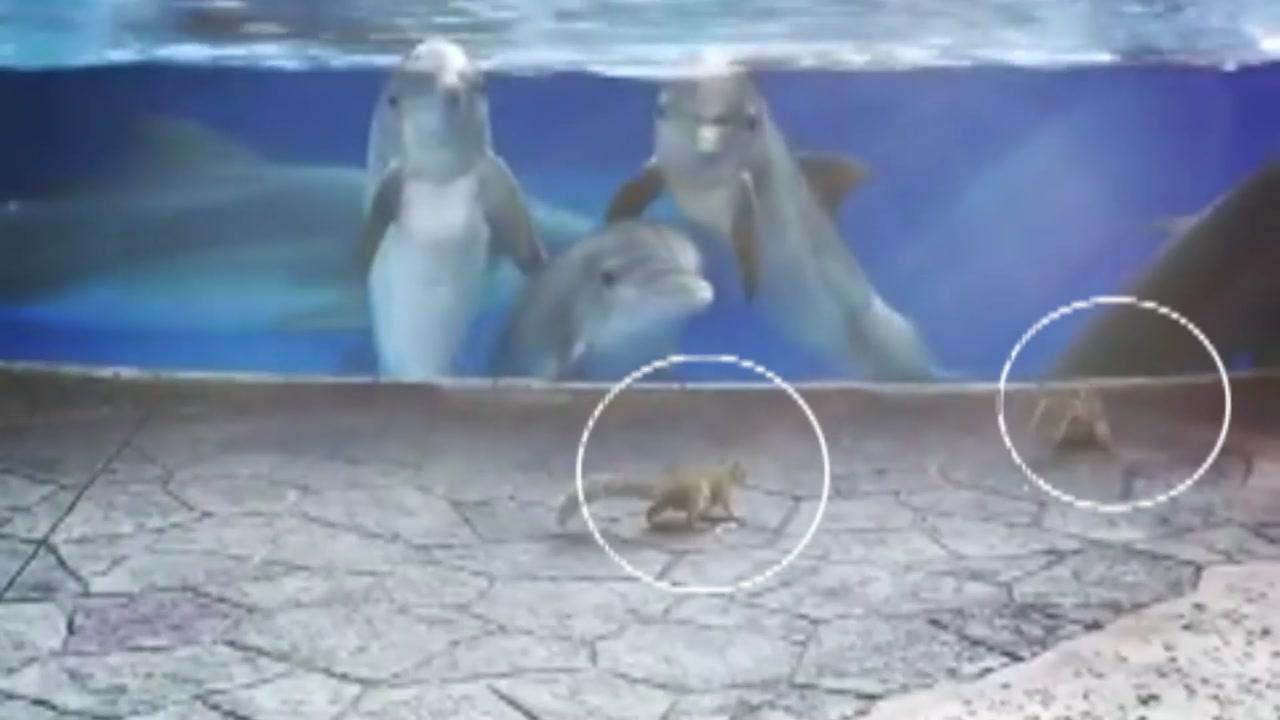 '너희들 귀엽다'...다람쥐가 궁금한 돌고래들