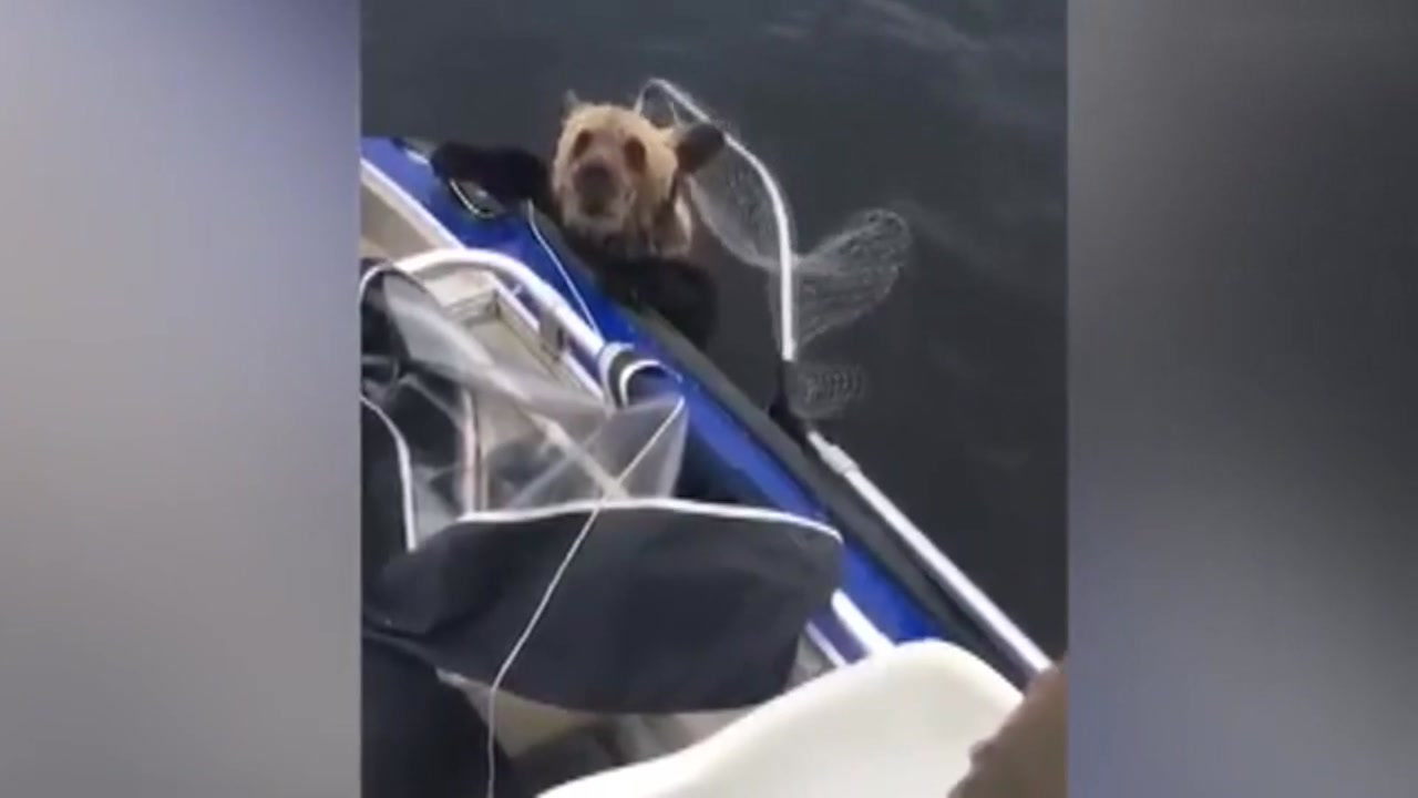 익사 직전 낚시꾼들에게 구조된 새끼 곰