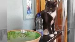[영상] 물병 본 고양이의 신기한 반응