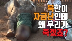 [자막뉴스] 北 자금난에 죽어가는 코끼리와 코뿔소