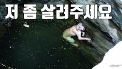 [자막뉴스] 우물에 빠진 '앙상한 개' 긴급 구조