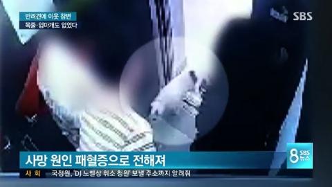최시원家 개, 한일관 대표 물던 상황 담긴 CCTV 영상 공개