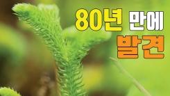 [자막뉴스] 희귀 식물 '물석송' 80년 만에 발견
