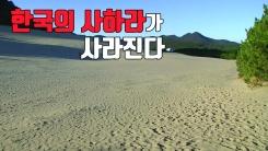 [자막원고] '한국의 사하라'가 사라진다