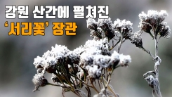 [자막뉴스] 강원 산간에 펼쳐진 '서리꽃 장관'