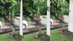 한 여성의 고군분투...'태풍 속 나무 지키기'