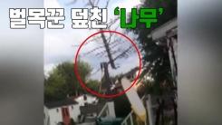 [자막뉴스] 벌목꾼 덮친 '나무'