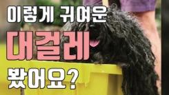 [자막뉴스] 핼러윈 강아지 축제 승자는 대걸레?!