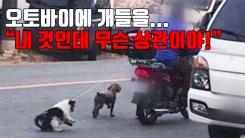 """[자막뉴스] 오토바이에 개들을...""""내 것인데 무슨 상관이야!"""""""