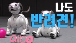 [자막뉴스] 나도 반려견! 더 똑똑해진 '로봇 강아지'