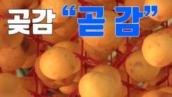 [자막뉴스] 붉게 물든 양촌 마을...곶감 만들기 '한창'
