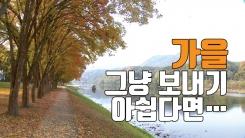 [자막뉴스] 가을의 끝자락 '영동 송호관광지'에서 힐링하세요