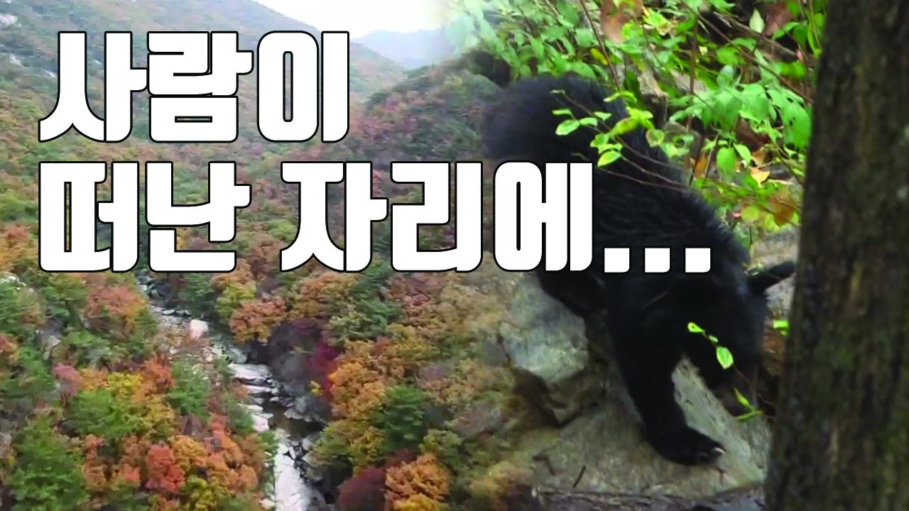 [자막뉴스] 반달곰 마을로 다시 태어난 '하늘 아래 첫 동네'