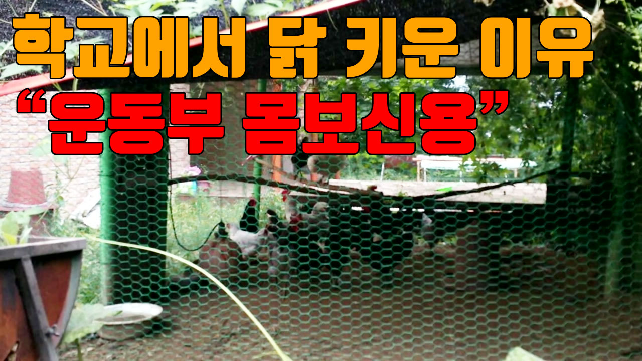 """[자막뉴스] """"운동부 몸보신용"""" 학교에서 닭 키운 이유"""
