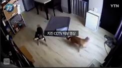 """[제보영상] """"잠자던 개도 깜놀""""···포항 지진 CCTV"""